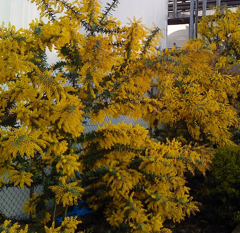 Whats My Favourite Tree Yalumba Gardener